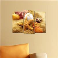Deniz Kabukları Desen Duvar Panosu